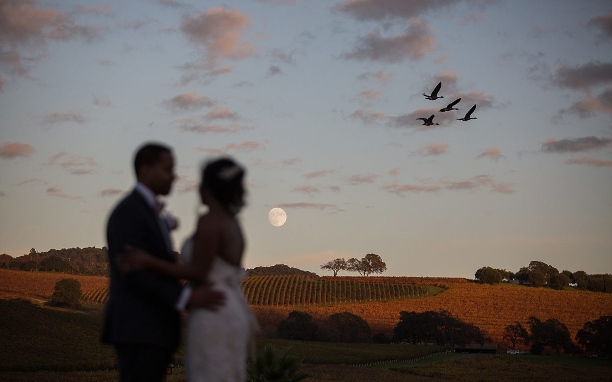 Chris and Brianna's Intimate Sequoia Ceremony followed by a Festive Sonoma Wedding Reception