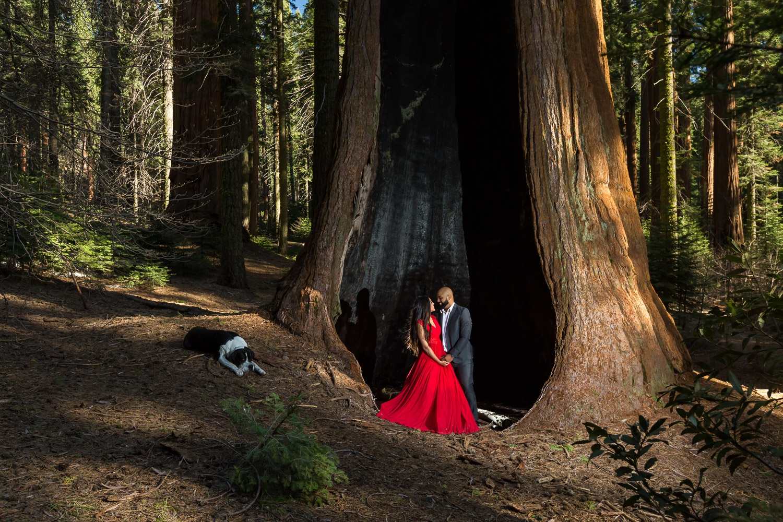 Sequoia National Park Wedding Tree Engagement Photography